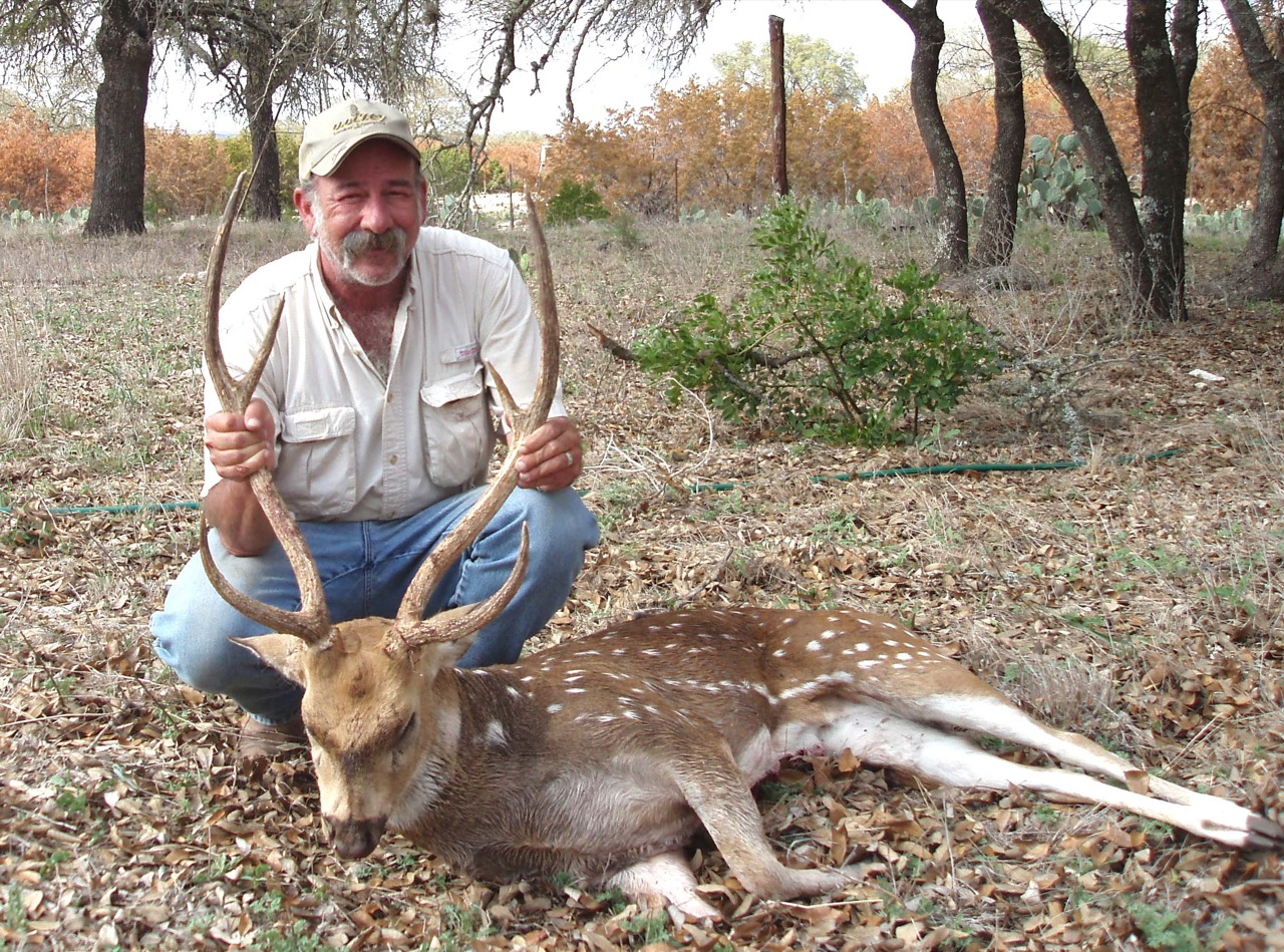 axis deer hunts in texas hill country