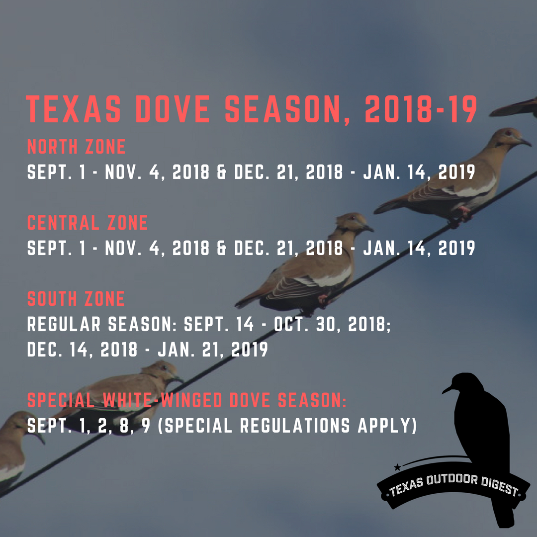 Texas Dove Hunting Forecast Good Heading Toward September Staple