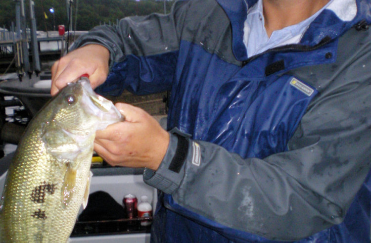 Bass fishing tips for finicky fish stack the deck in your favor