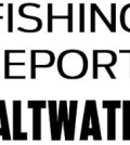Saltwater fishing conditions and catches across Texas