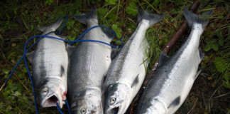 Alaskan fishing success comes down to planning, timing and even luck