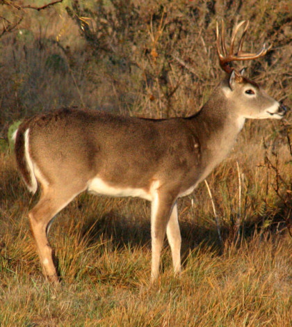 The big buck forecast typically rests on quality, but many areas are seeing an increase in quantity, which could lay the foundation for big things in coming seasons.