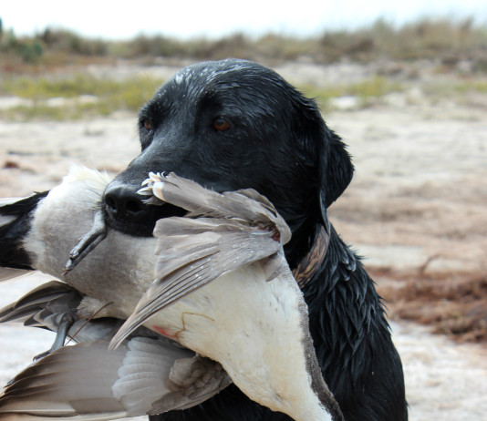 The variety of Lone Star State waterfowl hunting locales is only upstaged by our distinct ecosystems.