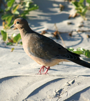 Texas boasts fall dove populations in excess of 40 million birds and its roughly 300,000 dove hunters harvest about 6 million birds annually.