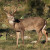 2014 Texas deer hunting seasons projected to feature big bucks