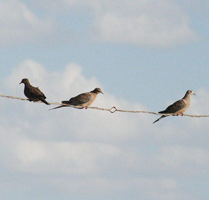 Dove and teal seasons are under way in Texas.
