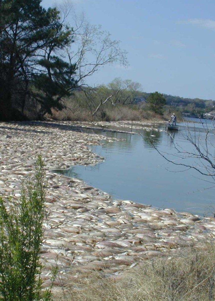 Golden alga in Texas remains threat to fisheries, game fish success