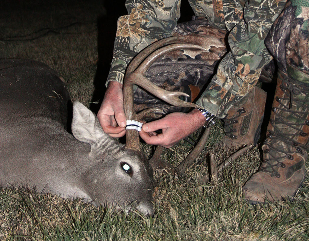 The deer hunting on Texas Wildlife Management Areas centers on maintaining healthy and sustainable populations.